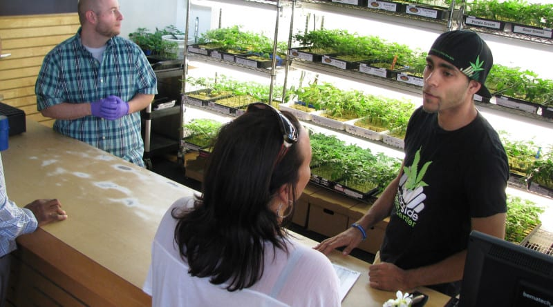 Harborside Health Center employee Mike Lewis, right, talks to a patient interested in purchasing marijuana starter plants. Harborside, in Oakland California, is one of the largest marijuana dispensaries in the nation.     Herald-Tribune Staff Photos / MICHAEL POLLICK;  2014