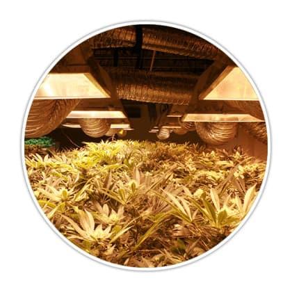 3D Cannabis Center - visit3d.com